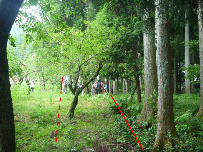 Left-lateral offset tree line