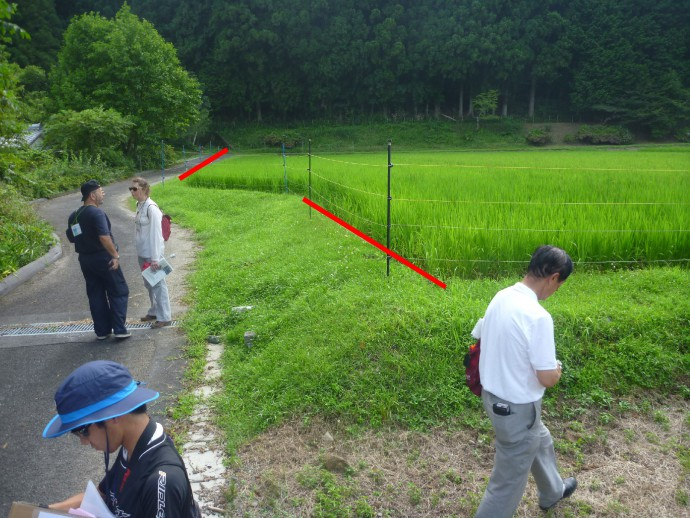 Left-lateral offset rice paddies