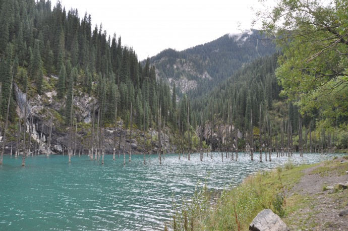 Drowned trees in the Kaiyndy landslide lake. From the decay of the trees and the rocks in the background one can distinguish at least three different lake levels.