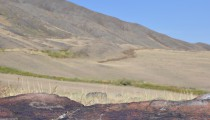 There were few petroglyphs only.