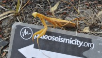 Our mascott, a friendly mantis.
